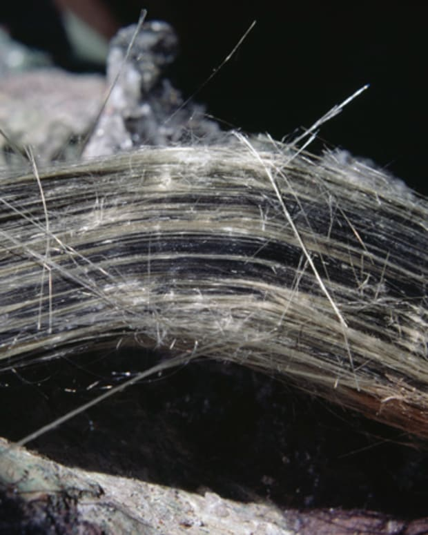 Asbestos fibers. (Photo by DeAgostini/Getty Images)