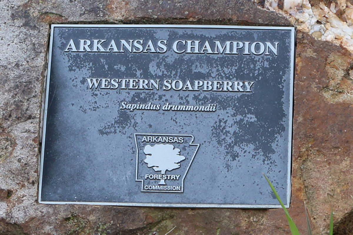 The designation plaque is mounted on a rock at its base.