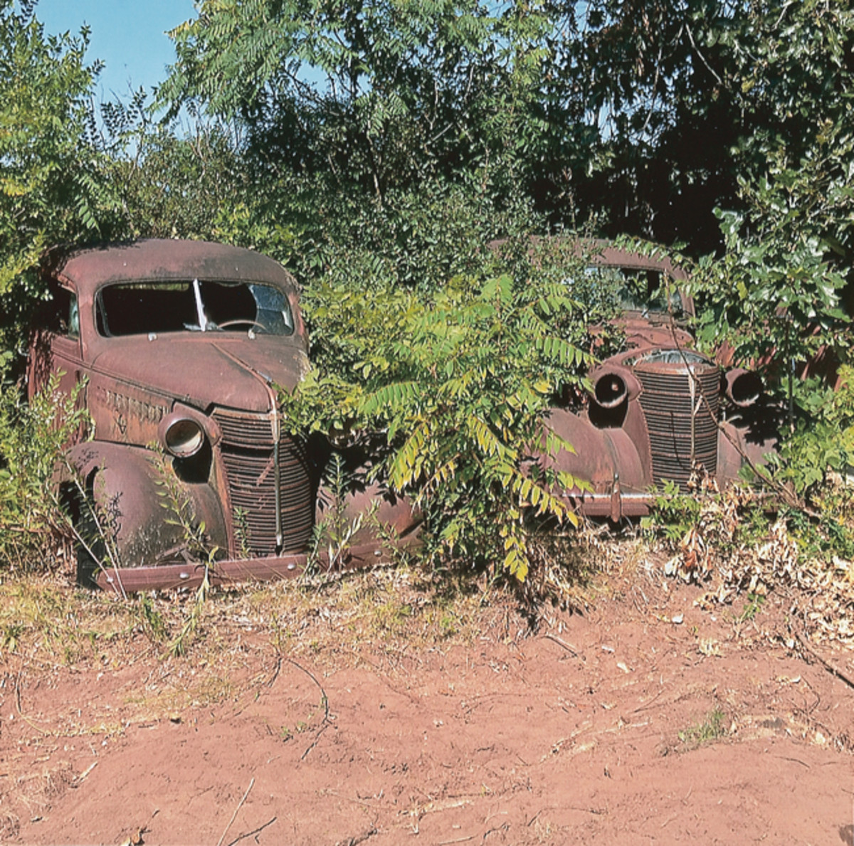 All the vehicles parked on the outer edges of Golden Sands Salvage are engulfed in trees and deep brush in the summer, as evidenced by this pair of 1938 Chevrolet two-door sedans. There are actually more vehicles behind these Chevys that are invisible on a casual walk-through of the yard.